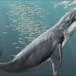 Ancient whale skulls and directional hearing: A twisted tale