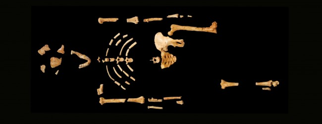 Lucy and Selam's Species Climbed Trees : Australopithecus Afarensis Shoulder Blades Show Partially Arboreal Lifestyle