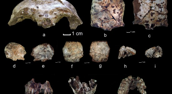 The researchers found skull fragments that date to 63000 years ago