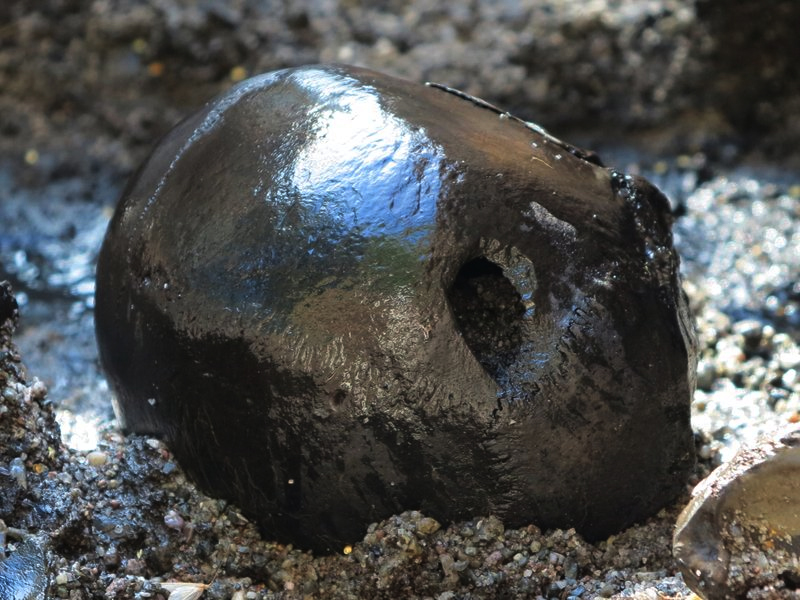 This is the first skull from the 2012 dig with a mortal wound caused by a spear or an arrow