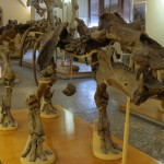 Did the changing climate shrink Europe's ancient hippos?