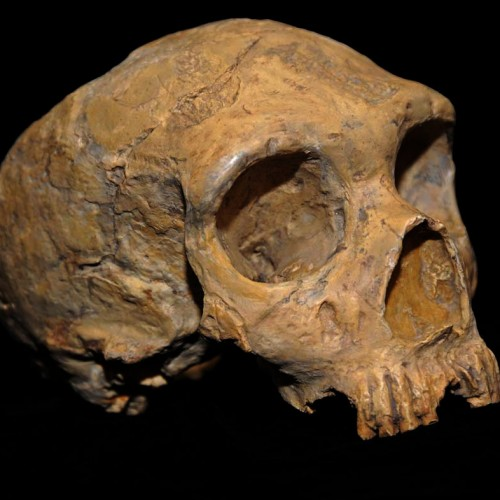 Dating encounters between modern humans and Neandertals