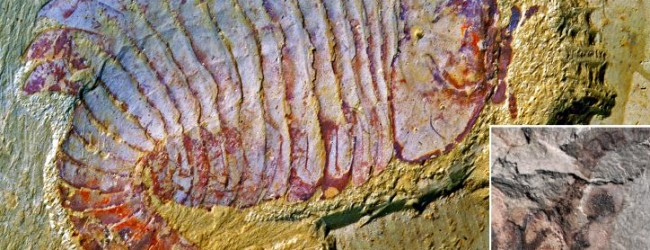 Cambrian Fossil Pushes Back Evolution of Complex Brains