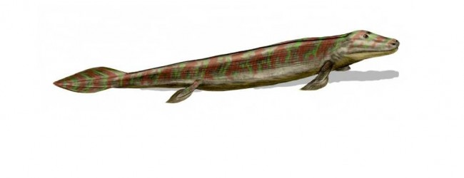 Discovery of new Tiktaalik roseae fossils reveals key link in evolution of hind limbs