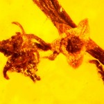 Amber fossil reveals ancient reproduction in flowering plants