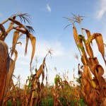 Archaeologists lend long-term perspective to food security and climate shock
