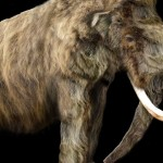 Research gives new insight into diet of large ancient mammals