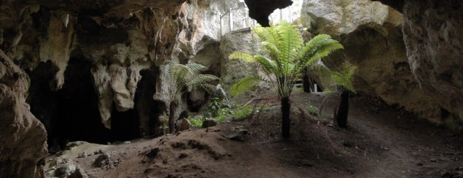 Unearthing the history of the Naracoorte Caves