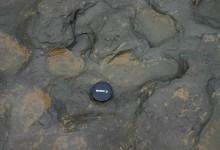 Hominin Footprints from Early Pleistocene Discovered in UK