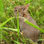 Rabbits give archaeologist a helping paw in Land's End find
