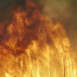 Forest emissions, wildfires explain why ancient Earth was so hot
