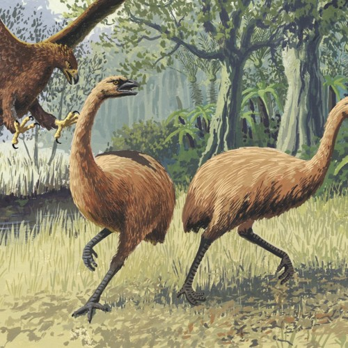 Unmasking the secrets of the extinct moa