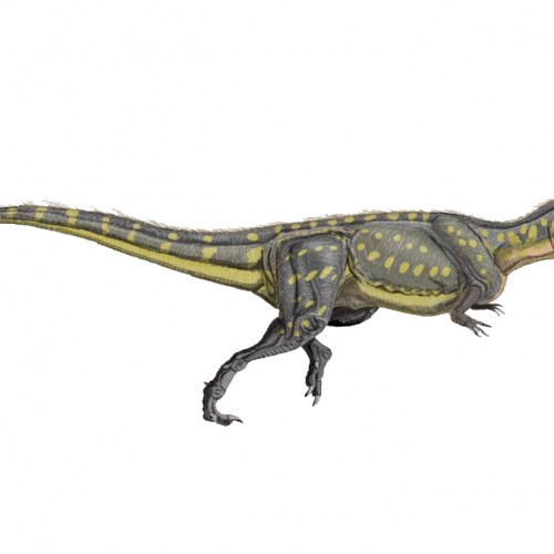 New dinosaur found in Portugal, largest terrestrial predator from Europe