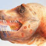 Dinosaur skull may reveal T. rex's smaller cousin from the north