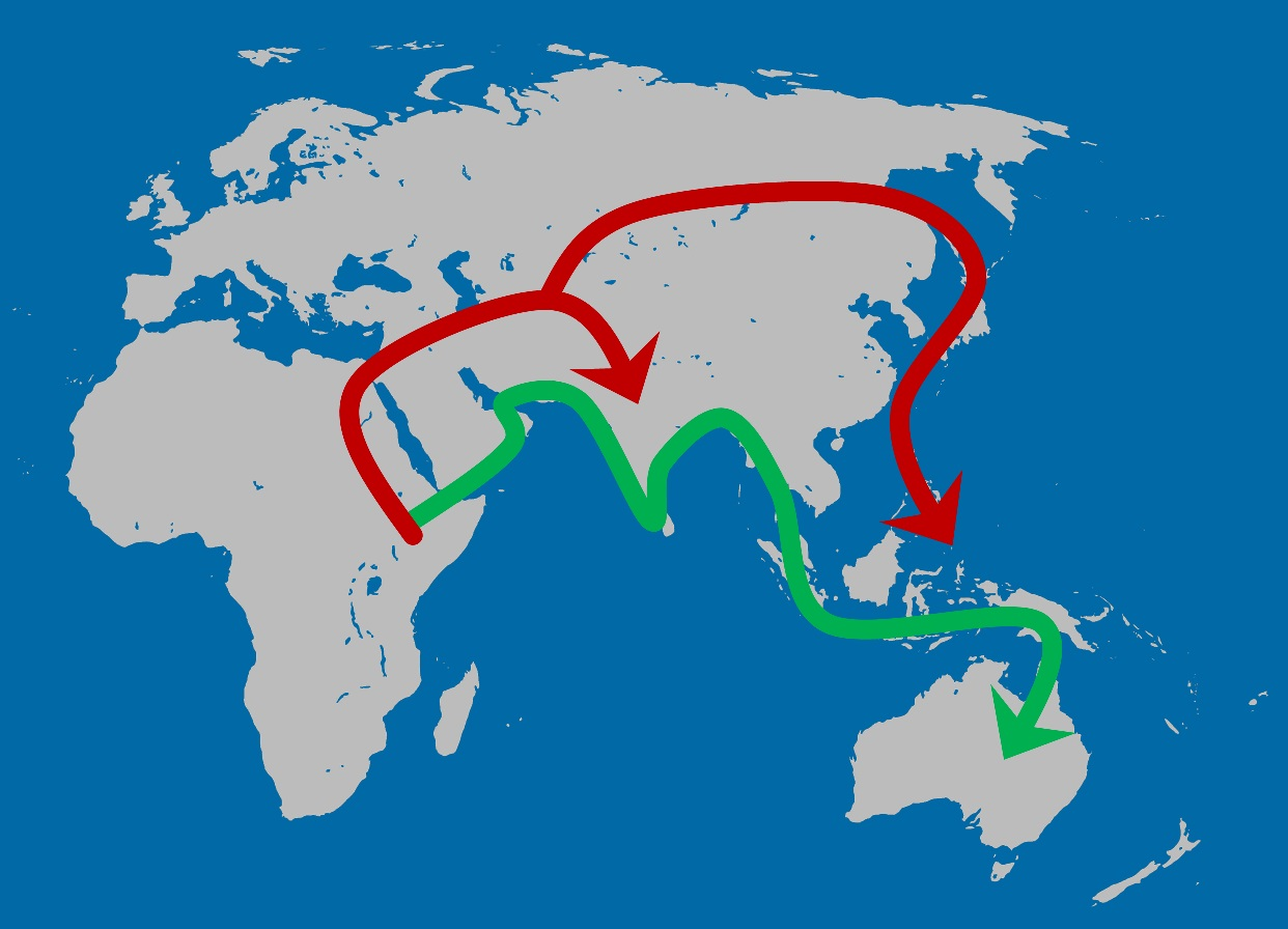 The Out-of-Africa model that best fits both the genetic and cranial shape data. A first migration along the Indian Ocean rim occurred as early as 130 thousand years ago (green arrow) and was followed by a second, more recent migration wave into Eurasia (red arrow). Figure: Katerina Harvati/University of Tübingen and Senckenberg Center for Human Evolution and Palaeoenvironment