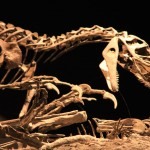 Revealing the healing of Dino-sores