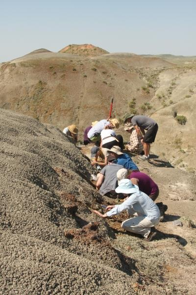 A McGill field crew is collecting fossils as part of a field course in Grasslands National. Credit: Hans Larsson/Emily Bamforth