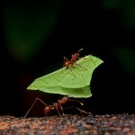 Insect diet helped early humans build bigger brains, study suggests