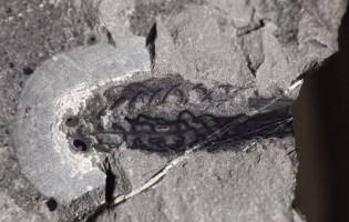 New fossil find pinpoints the origin of jaws in vertebrates