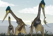 Toothless 'dragon' pterosaurs dominated the Late Cretaceous skies