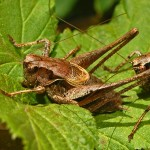 Scientists to explore how insects evolved ultrasonic hearing abilities over millennia