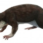 Jurassic Welsh mammals were picky eaters, study finds