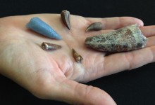 Tooth serves as evidence of 220 million-year-old attack