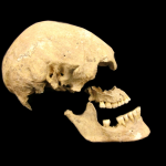 Genetic Makeup of Europeans
