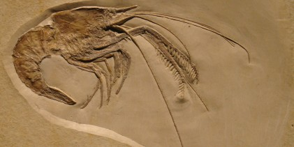 How good is the fossil record?