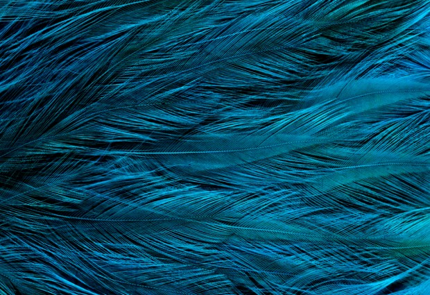 Seeing Dinosaur Feathers in a New Light