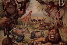 Massive geographic change may have triggered explosion of animal life
