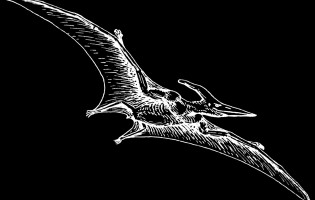 Tricky take-off kept pterodactyls grounded