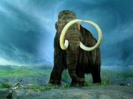 Woolly Mammoth autopsy results revealed