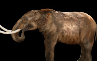 New volume documents the science at the legendary snowmastodon fossil site in Colorado